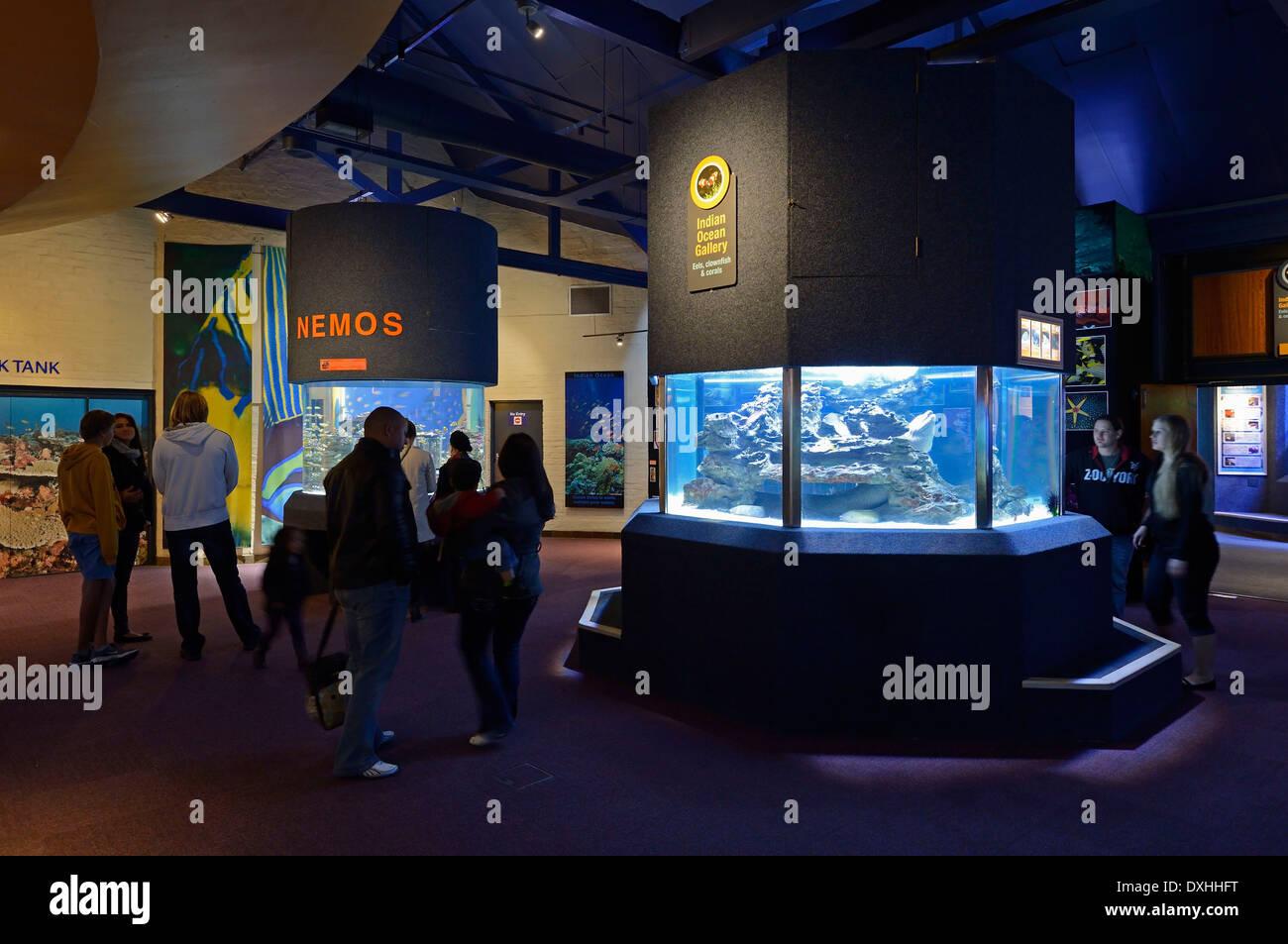 L'Aquarium des deux océans, vue de l'intérieur, Cape Town, Western Cape, Afrique du Sud, l'Afrique Photo Stock