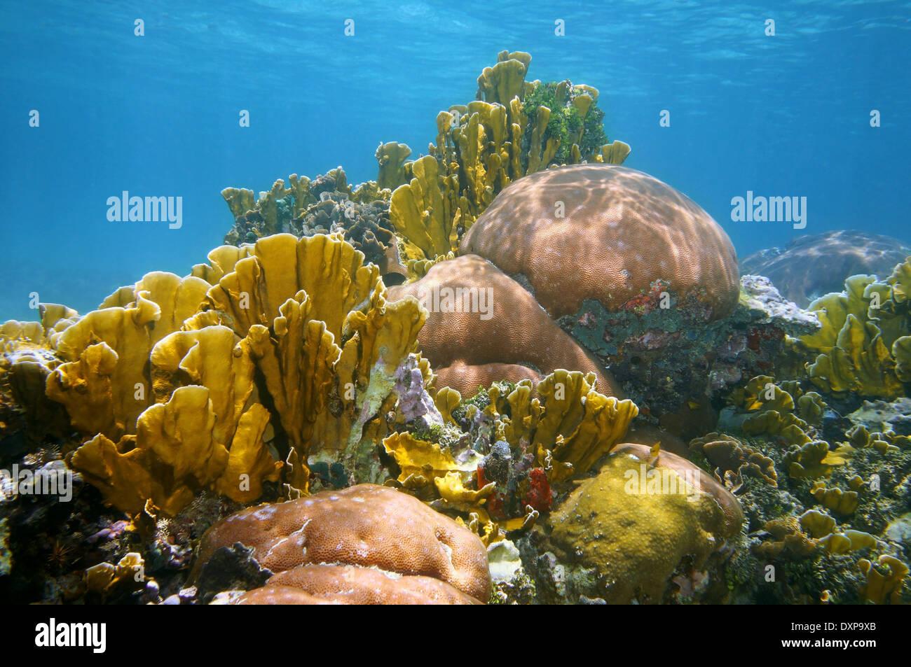 Dans un paysage sous-marin coral reef et florissant de la mer des Caraïbes Banque D'Images