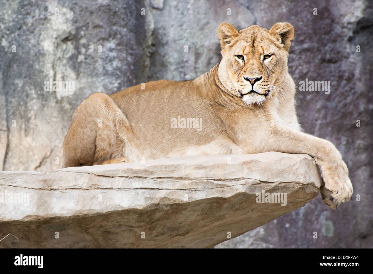Animaux de zoo Photo Stock
