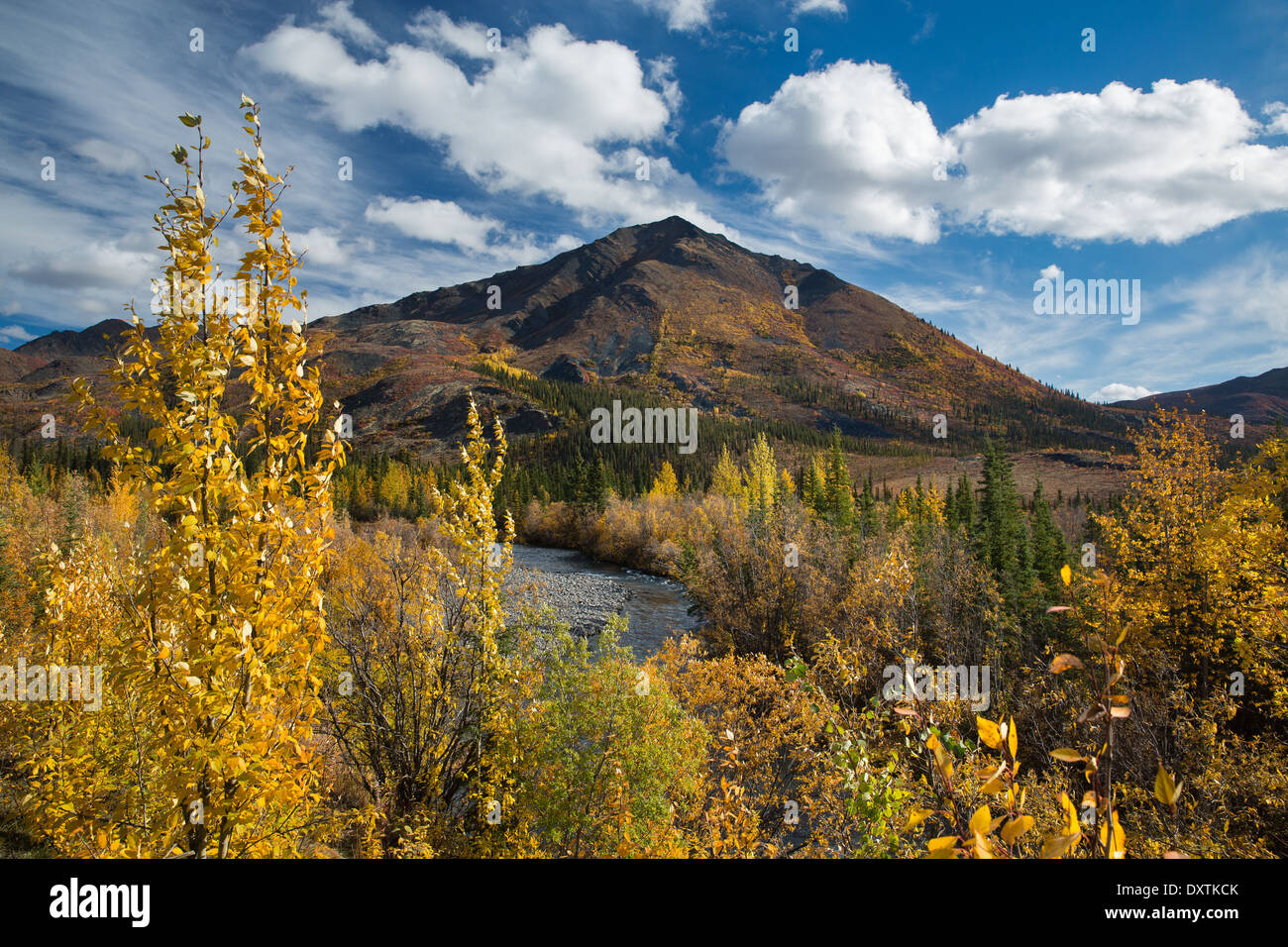 Couleurs d'automne frangeant la route Dempster, au Yukon, Canada Photo Stock