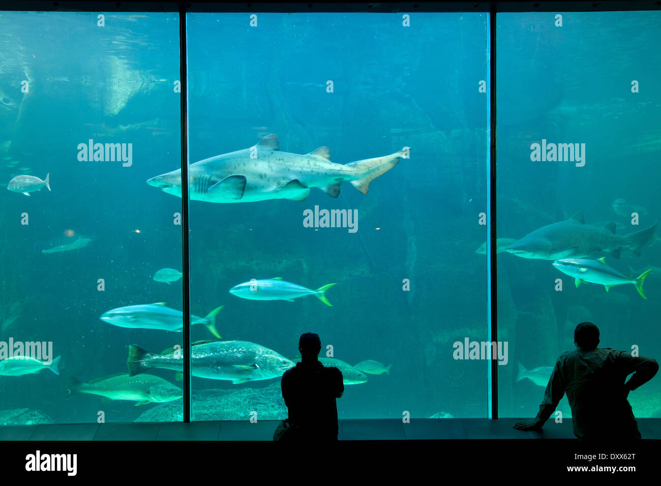 Two Oceans Aquarium, Cape Town, Western Cape, Afrique du Sud Photo Stock