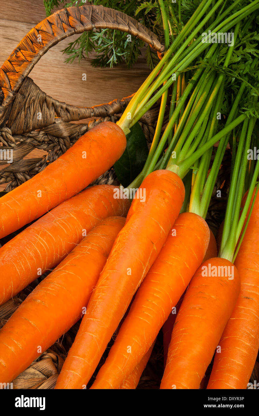 Un panier de carottes biologiques fraîchement cueillies Photo Stock
