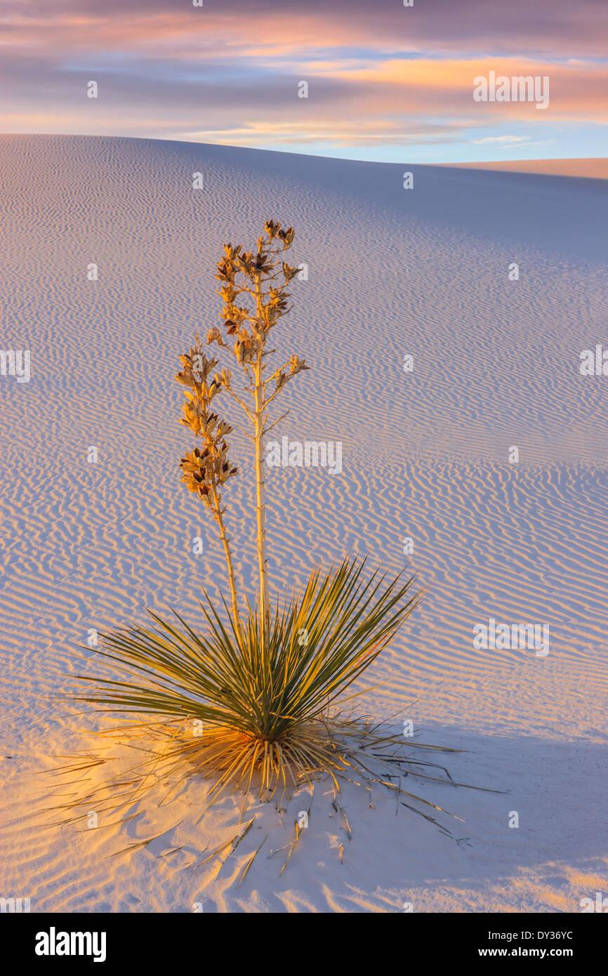 White Sands National Monument, près de Alamagordo, Nouveau Mexique, partie de la désert de Chihuahuan. Photo Stock