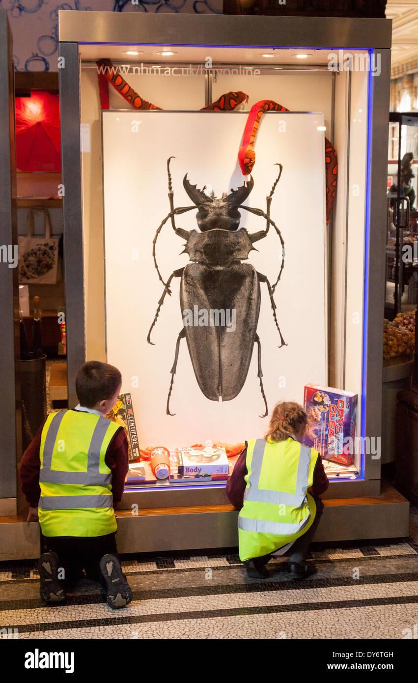 Les enfants âgés de 10 ans à apprendre au sujet d'insectes et de biologie / sciences, Natural History Museum London UK Photo Stock