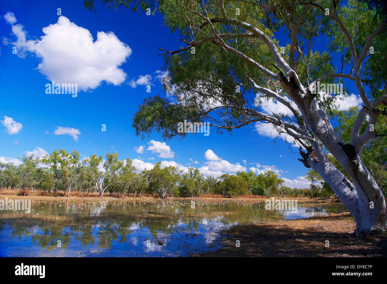 L'Australie, Billabong, Queensland, Savannah Way, Burketown, rivière, débit, Photo Stock