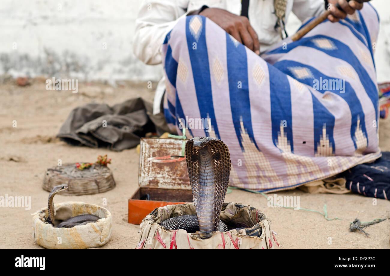 Charmeur de serpent avec son cobra ,Kutch ,l'Inde Photo Stock