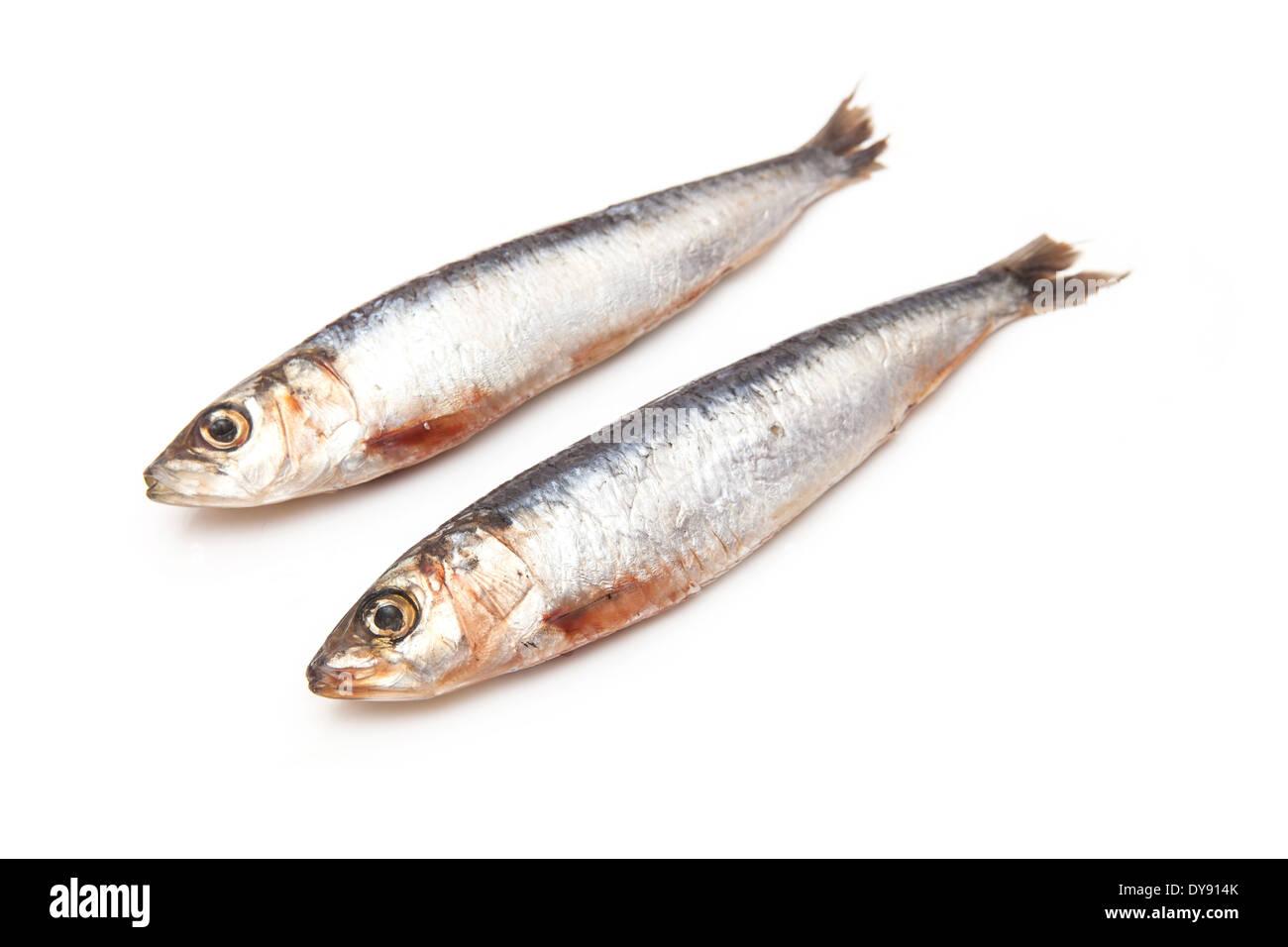 Cornish sardines isolated on a white background studio. Photo Stock