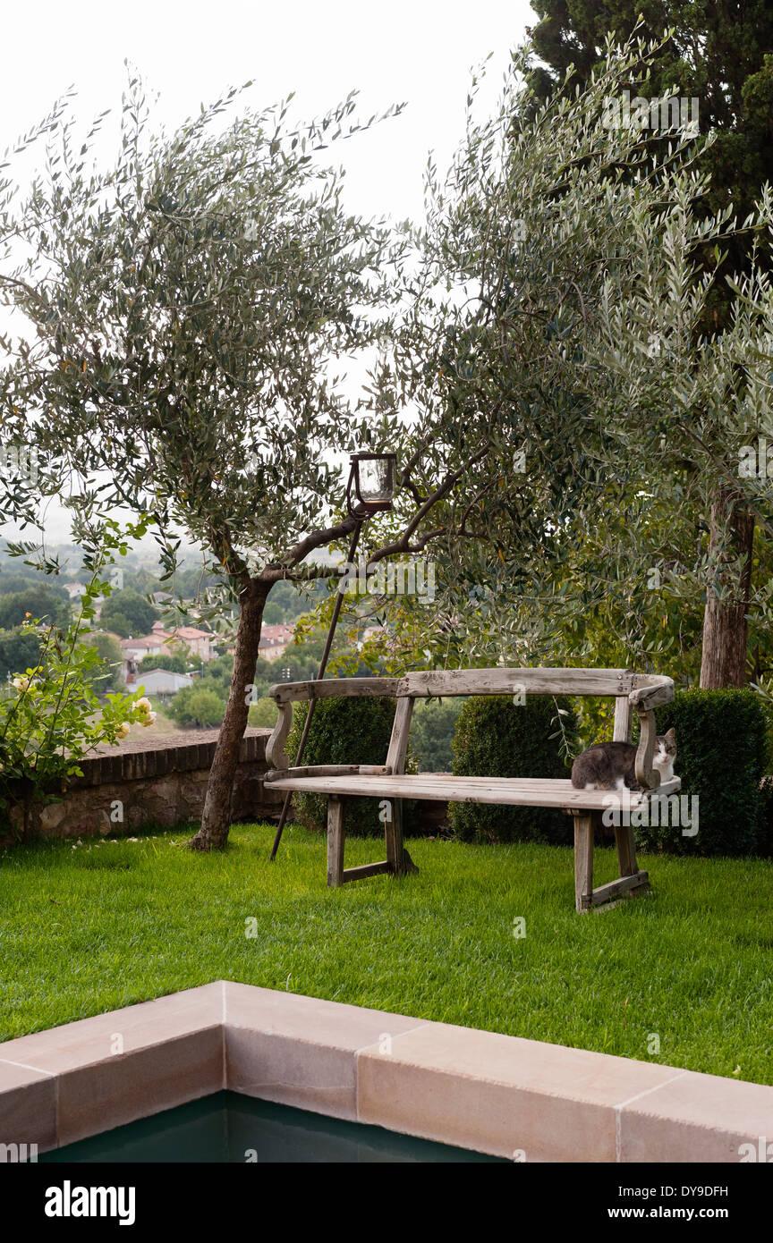 Vieux Banc De Jardin vieux banc en bois rustique sous un olivier dans un jardin