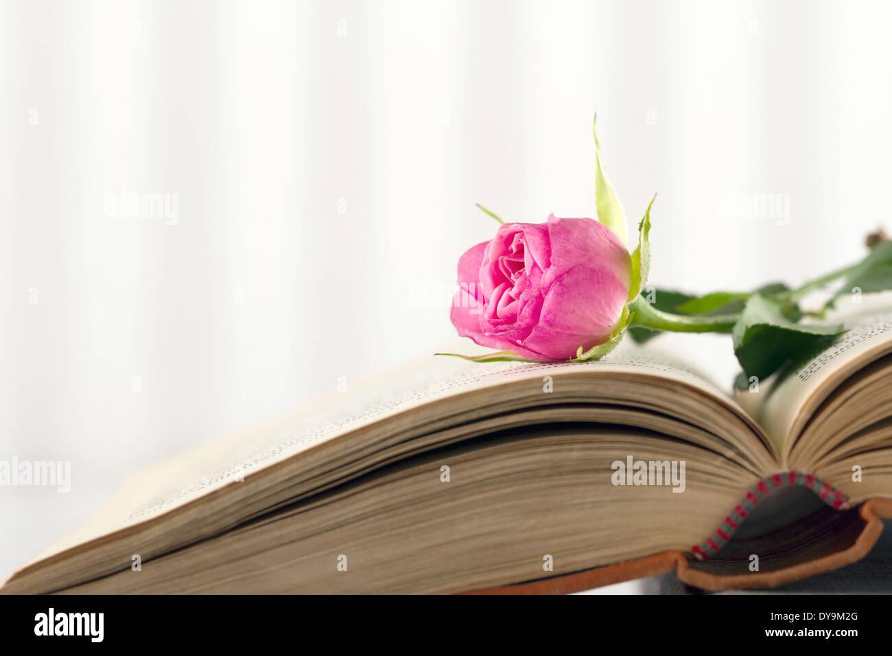 Avec un seul livre ouvert sur fond rose rose vintage Banque D'Images