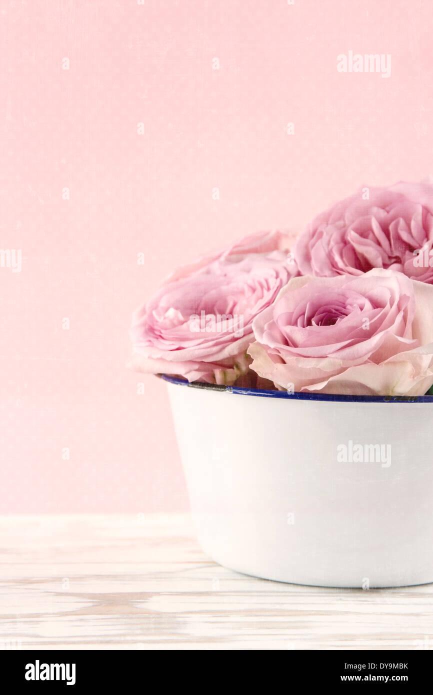 Roses roses dans un vase ancien blanc sur fond de bois blanc vintage Banque D'Images