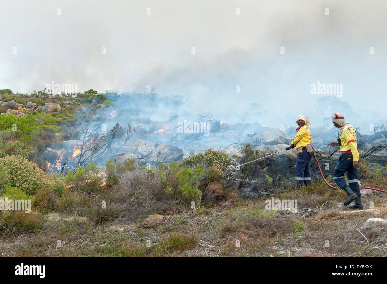 Exercices pompiers brûlage contrôlé de la végétation pour stimuler la nouvelle croissance, péninsule du Cap, Western Cape, Afrique du Sud Photo Stock