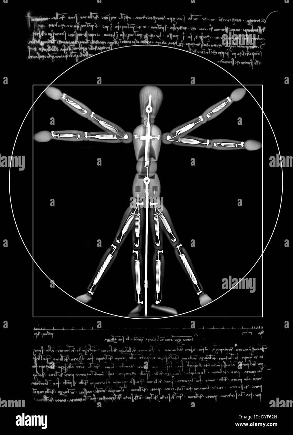 Homme de Vitruve un mannequin sous x-ray Banque D'Images