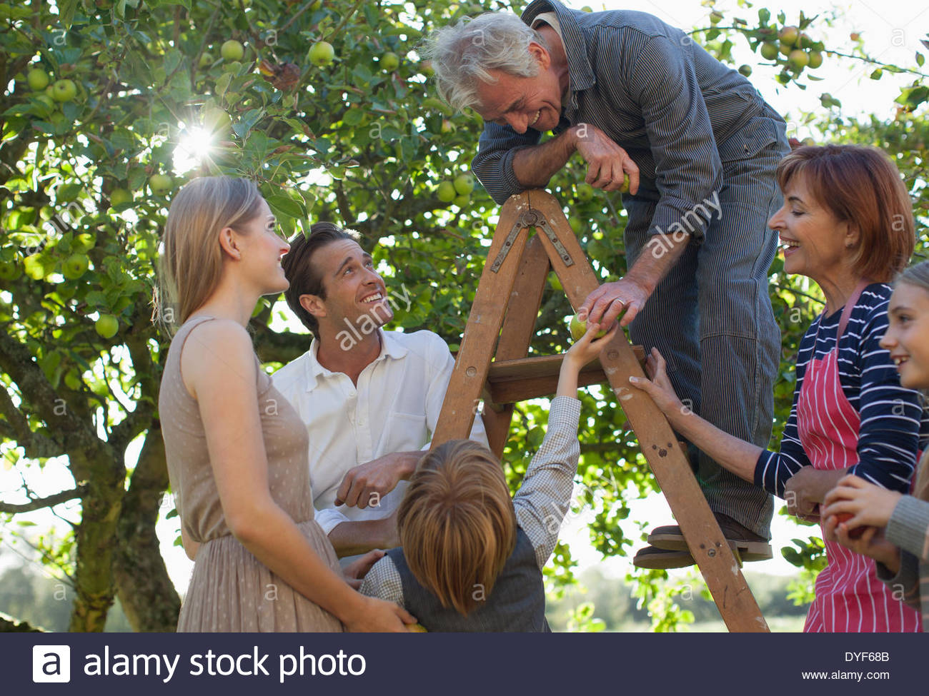 Multi-generation family harvesting apples in orchard Photo Stock