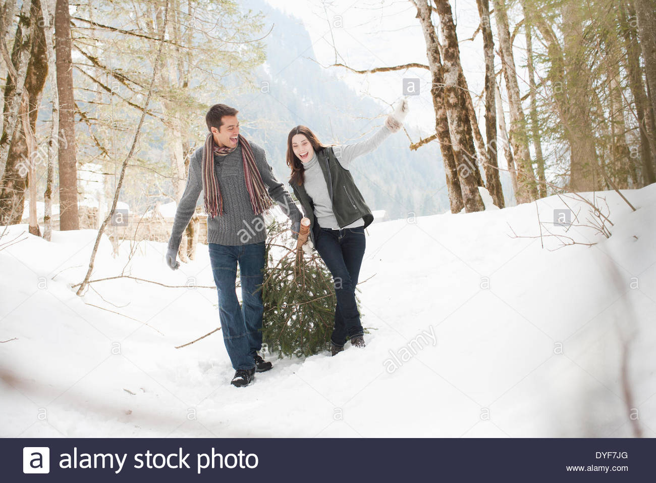 Couple pulling Christmas Tree in woods Photo Stock