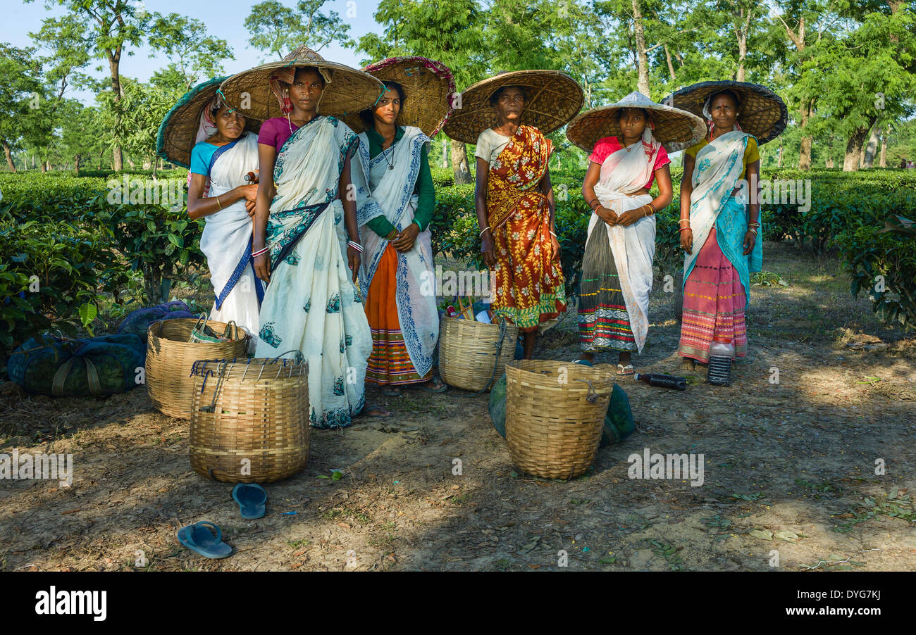 Les cueilleurs de thé avec leur journée de récolte des feuilles de thé en attendant qu'elle soit pesée sur une plantation de thé près de Jorhat, Assam, Inde. Photo Stock