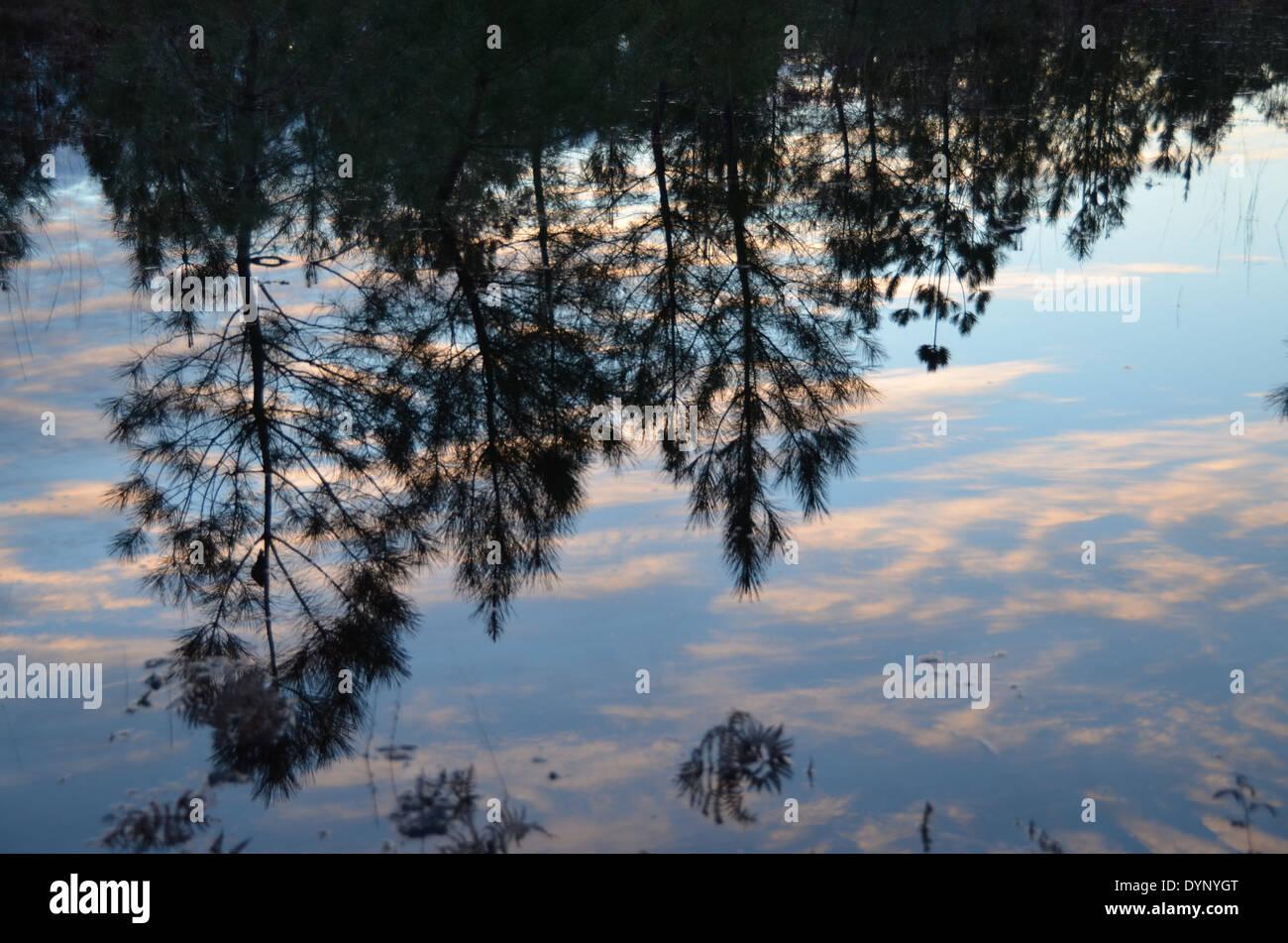 Inondations dans la forêt des Landes, Aquitaine, France. Photo Stock