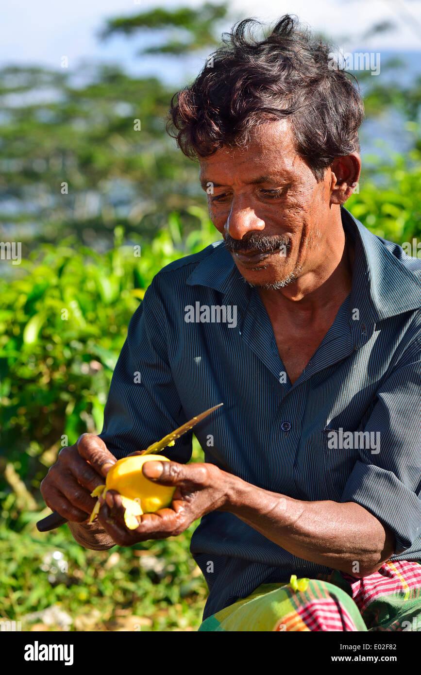 Peler une mangue mangue vendeur avec un couteau, Kandy, Sri Lanka, Province centrale Photo Stock