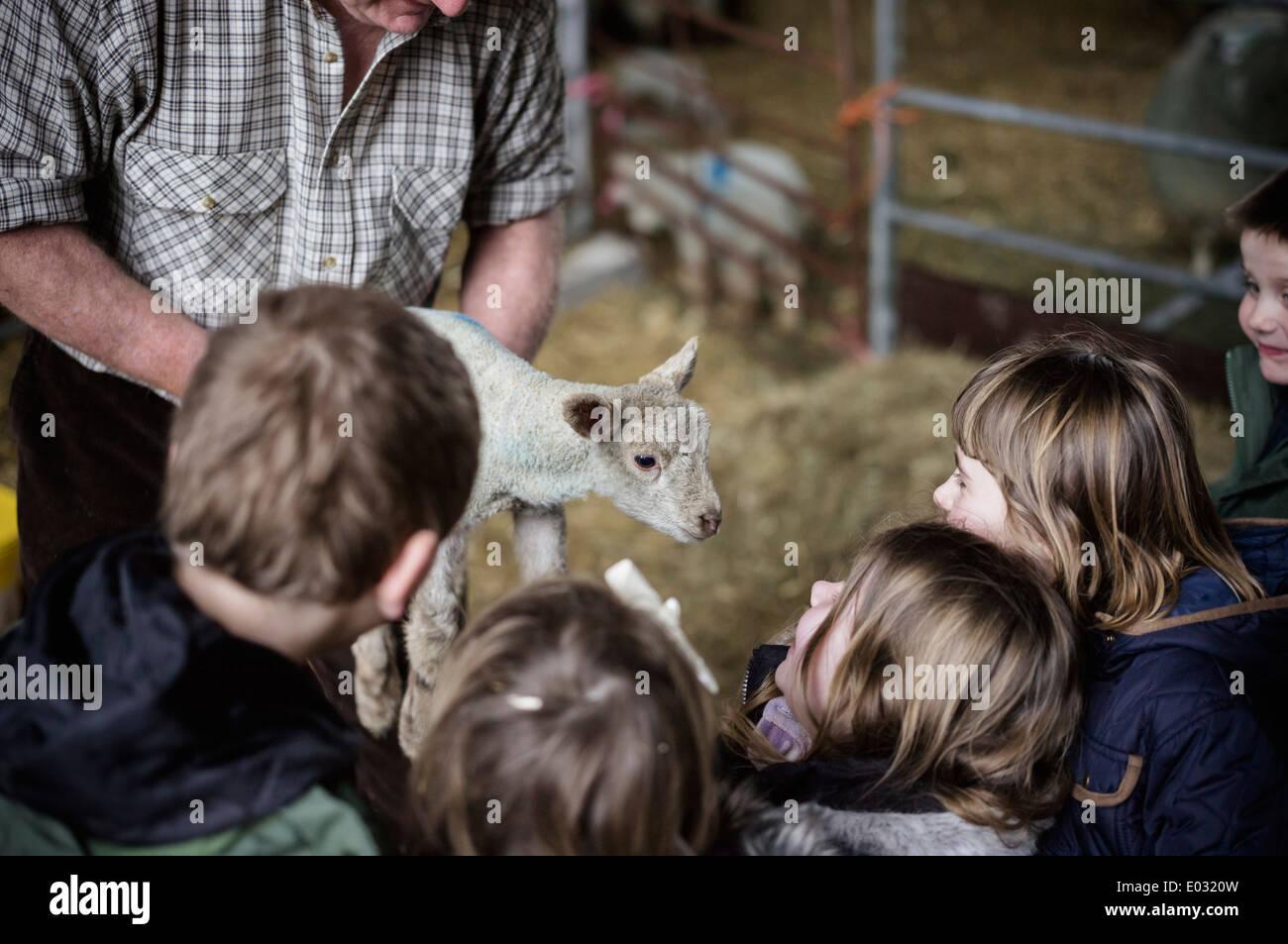 Les enfants et les nouveau-nés agneaux dans un hangar de l'agnelage. Photo Stock