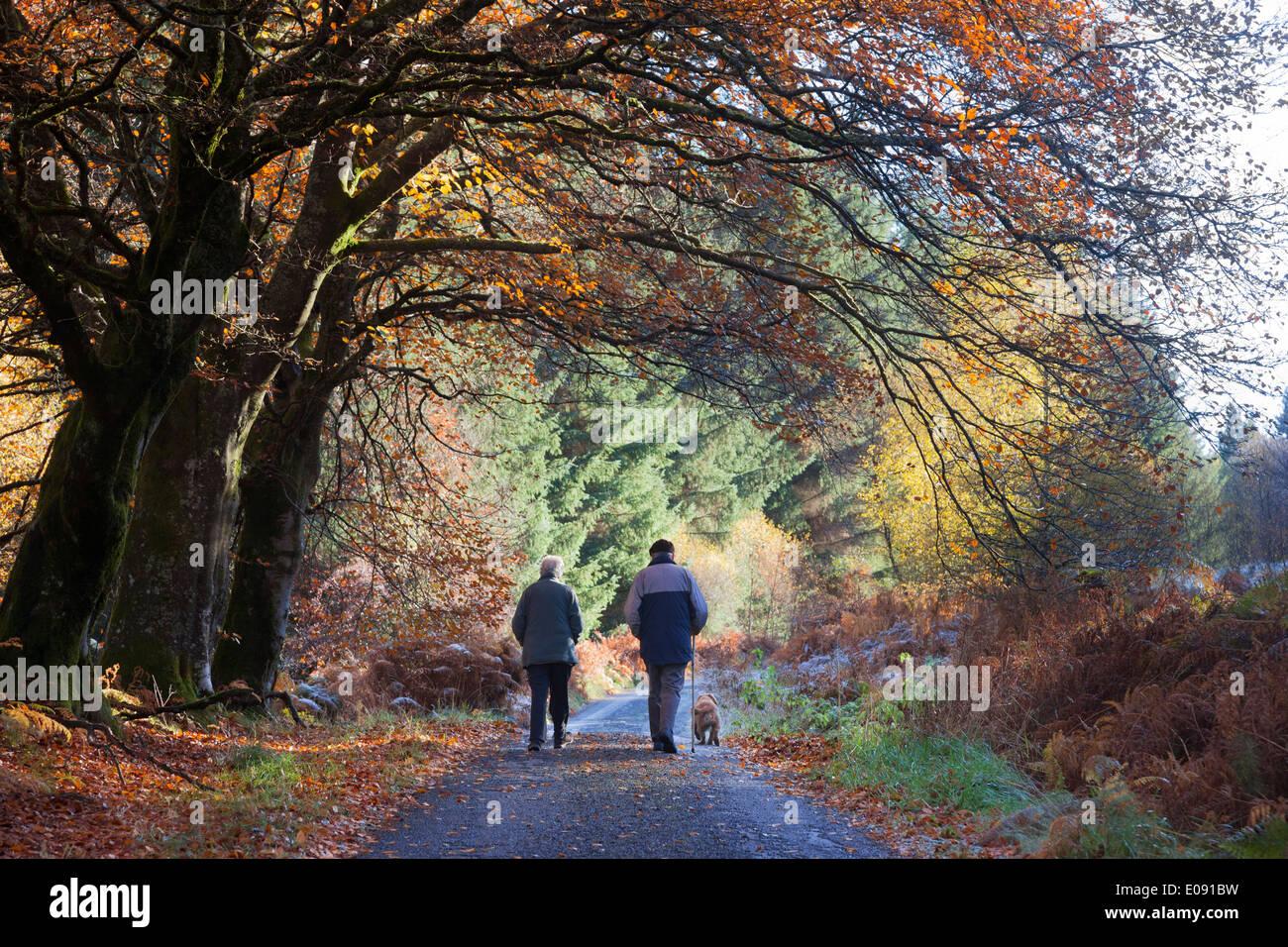 Couple de personnes âgées et chien en promenade en automne, Sidwood Forêt, Parc National de Northumberland, UK, Novembre 2013 Banque D'Images