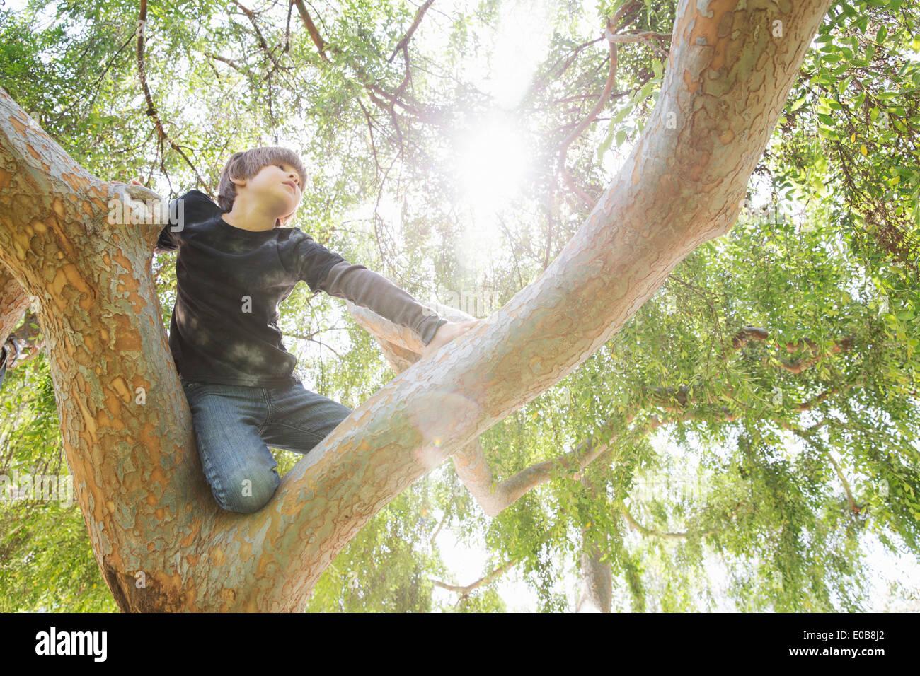 Boy hiding in sunlit tree yeux dans distance Photo Stock