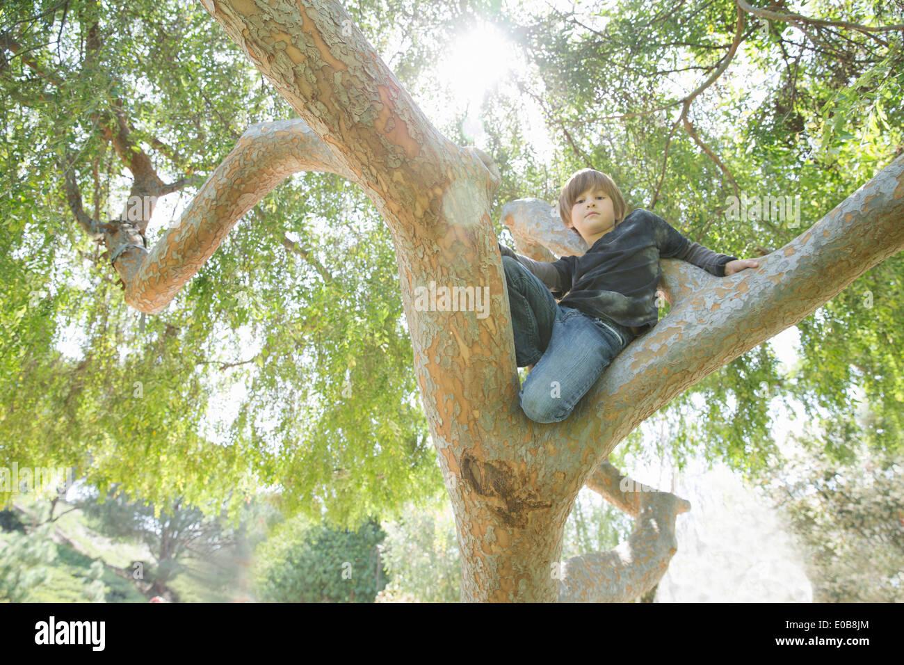 Boy hiding in tree et regardant vers le bas Banque D'Images