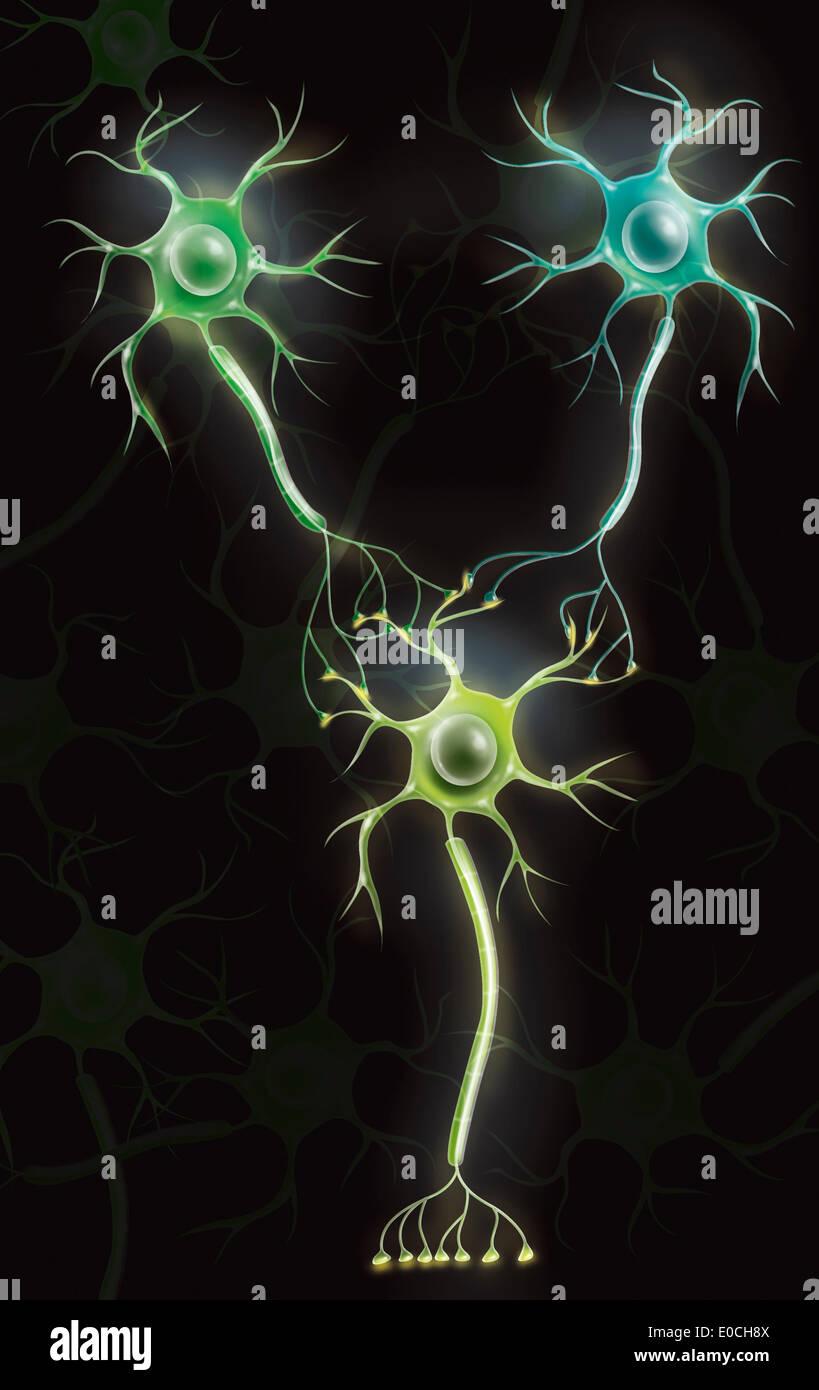 Neuron, dessin Photo Stock