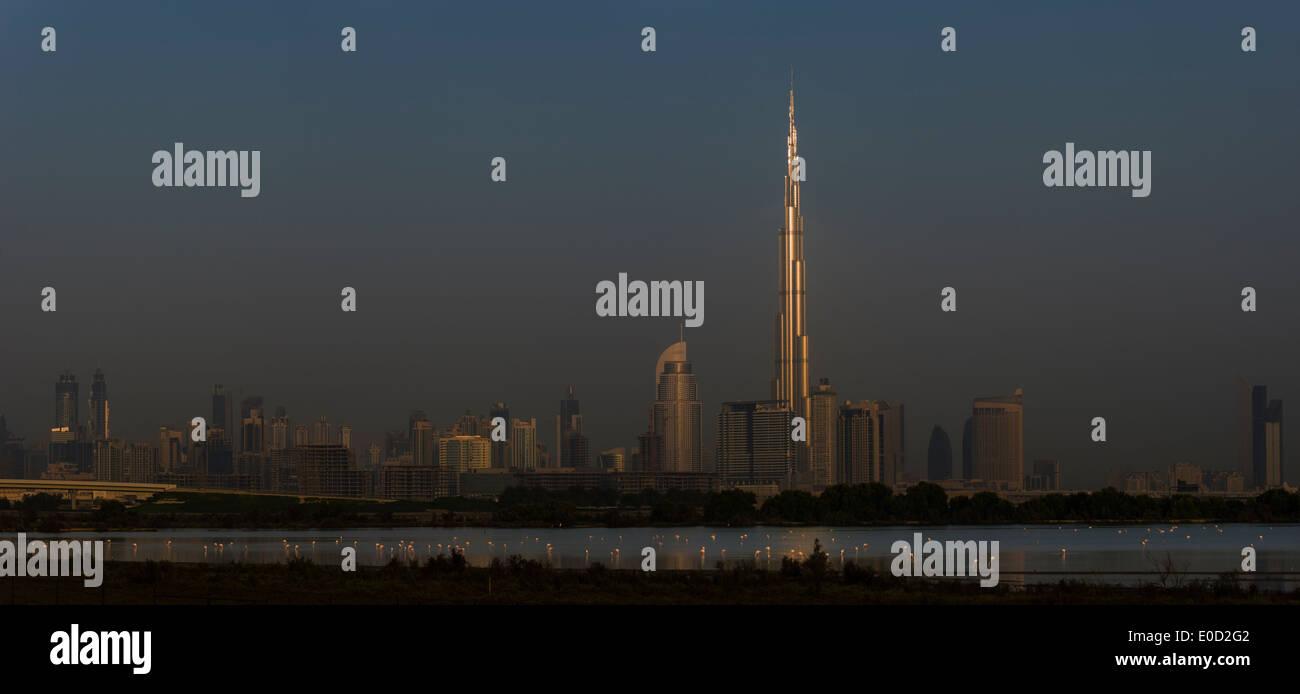 Plus de flamants roses et le soleil d'attraper le Burj Khalifa, Dubai, Émirats arabes unis (Phoenicopterus roseus) Photo Stock