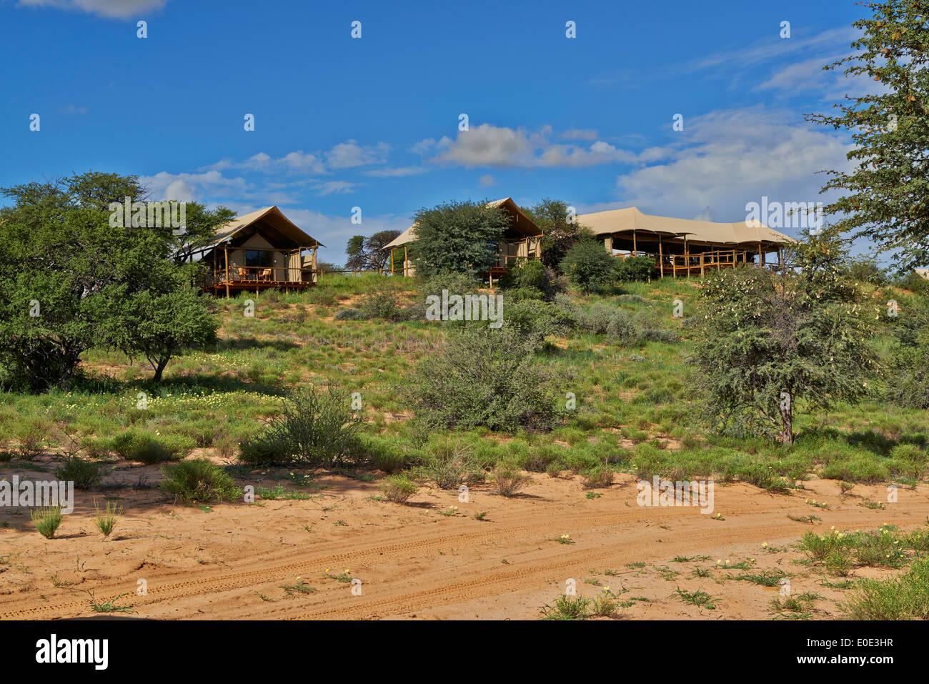 Polentswa Tented Camp, Kgalagadi Transfrontier Park, Kalahari, Afrique du Sud, Botswana, Africa Photo Stock