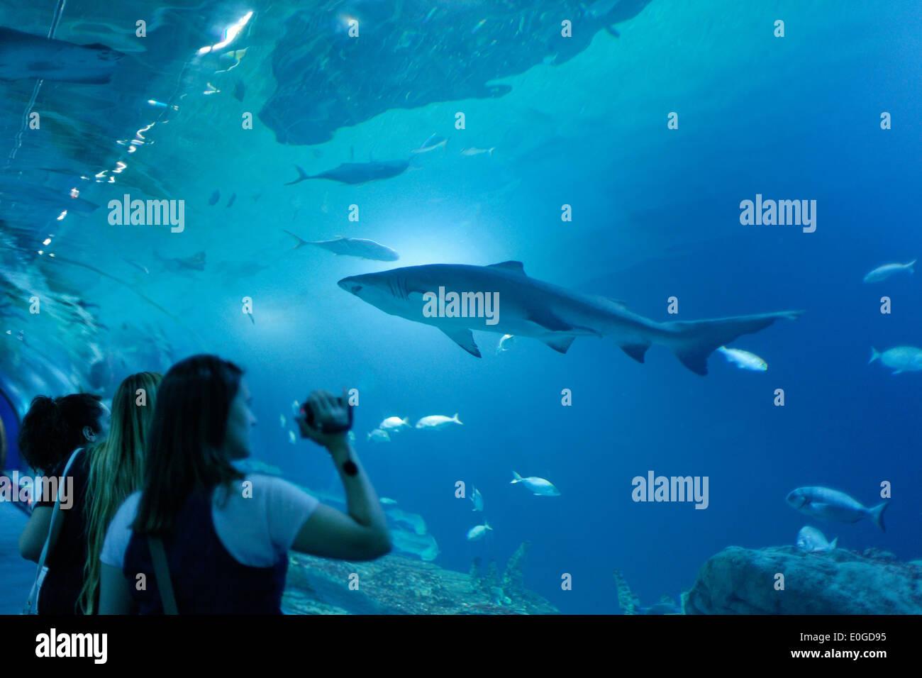 Aquarium des requins, L'Oceanografic, le plus grand aquarium d'Europe, province de Valence, Valence, Espagne Photo Stock