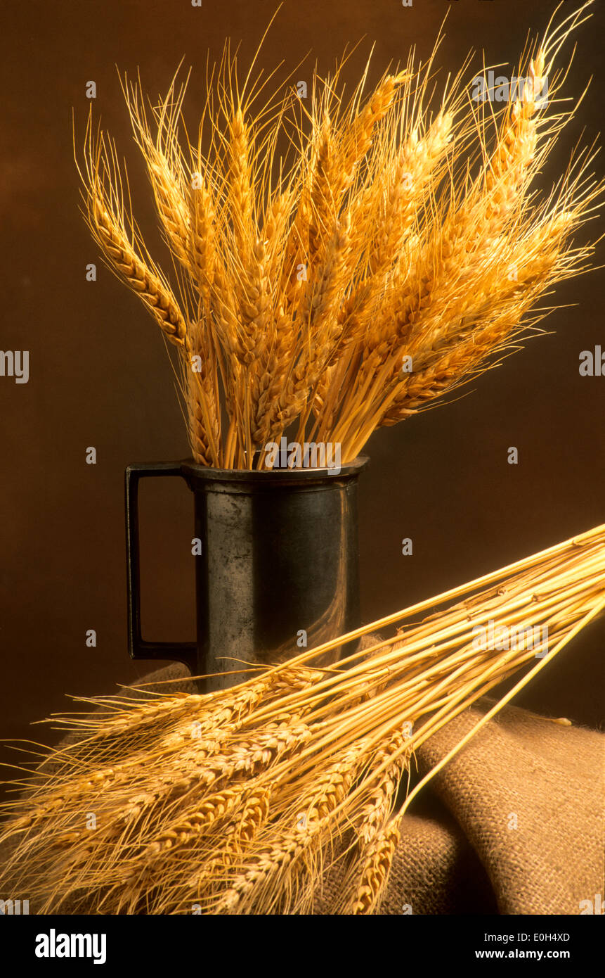 La vie toujours du blé Photo Stock