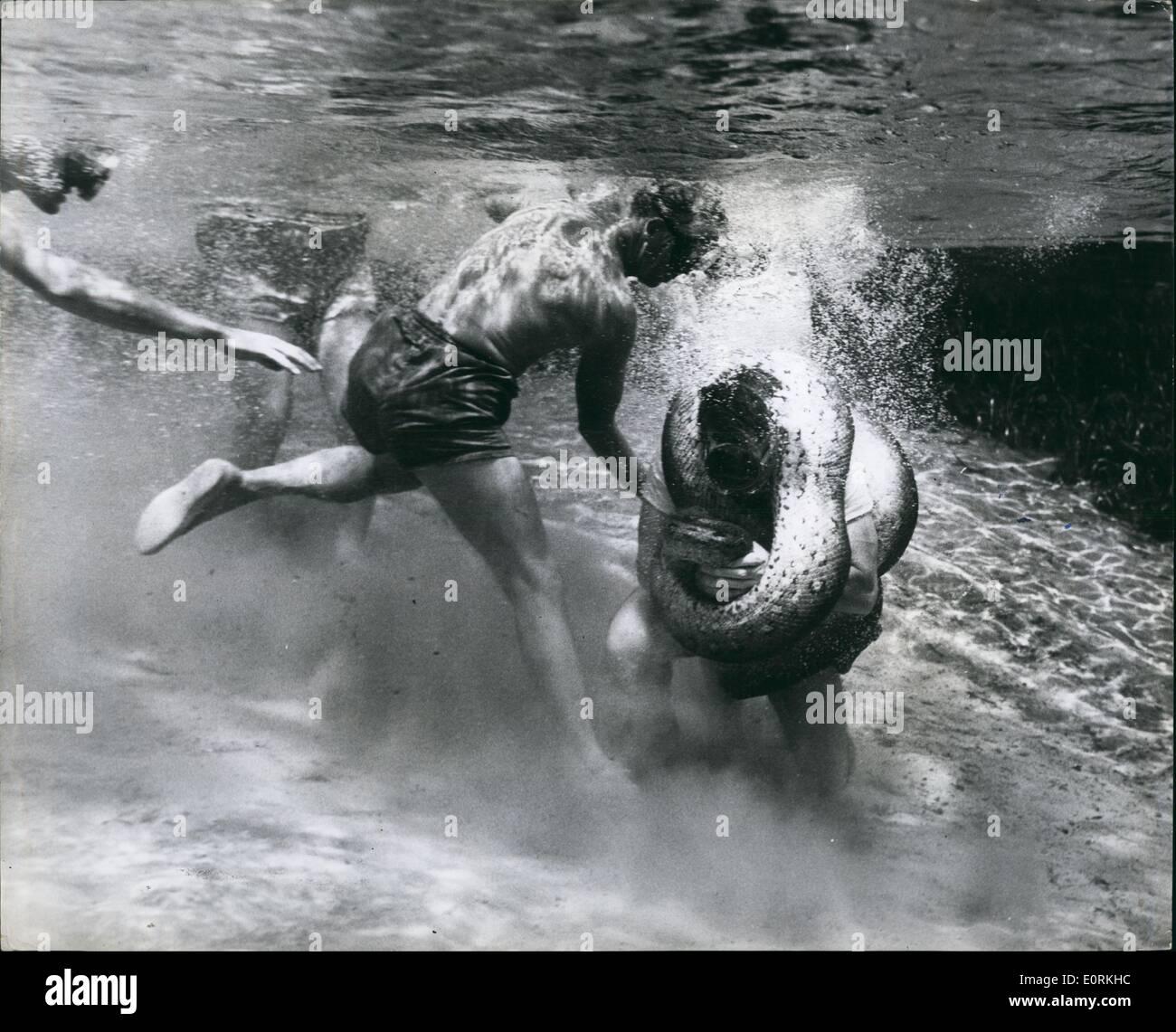 Jan 1, 1960 - l'homme contre anaconda - sous l'eau. Plus fantastique bataille d'une vie: horreur inscrit avec détermination sur le visage d'un petit groupe de spectateurs que Ross Allen à 50 ans a procédé sur le naturaliste américain maddest stunt de sa vie. aux prises avec un tueur sous l'Anaconda. Jamais auparavant l'histoire de l'humanité a un tel défi fantastique eu lieu Photo Stock