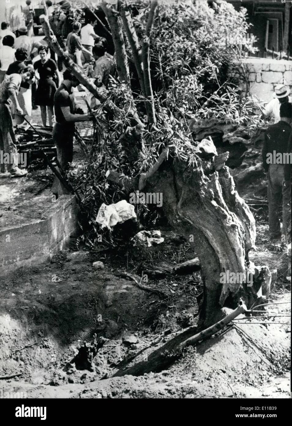 10 octobre 1976 - Arbre de Platon: endommagé l'arbre sacré de la cité d'Athènes , les 2 500 ans, a été endommagé Banque D'Images