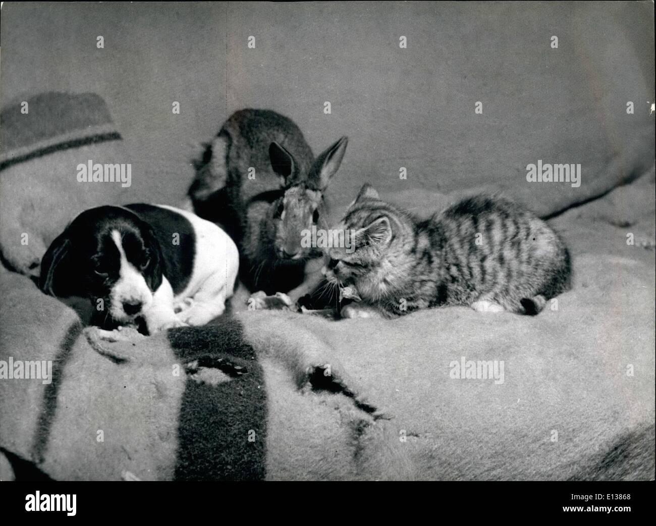 29 février 2012 - Strange red-compagnons: Ils sont le chaton, le chiot et le lapin eyed irascible, appartenant à Bristol femme du fermier, MmeE.m.Johnson. Tous sont les meilleurs amis. Photo Stock