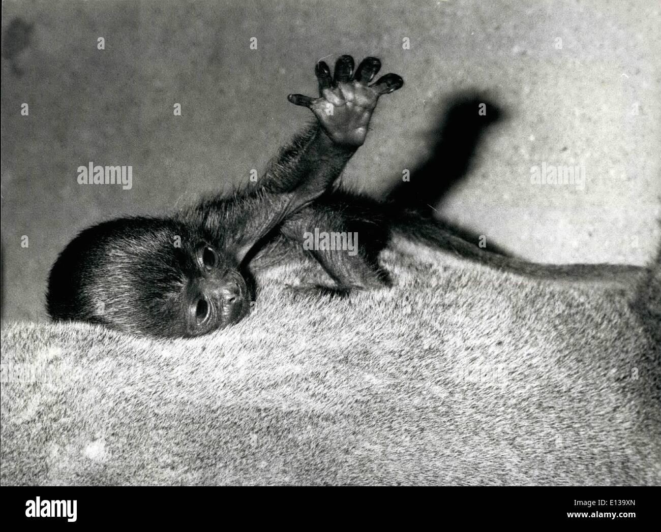 29 février 2012 - Première vue de la vie: ''Darien'' quinze jours Wooltape, représentée dans le zoo de Bâle en Suisse, tient son premier regard sur le nouveau monde tel qu'il se déplace sur le dos de la mère. Photo Stock