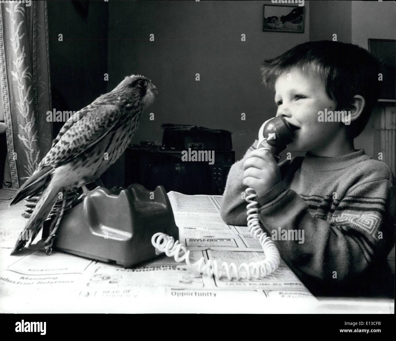 Mars 02, 2012 - Bureau mates: Quatre-année-vieux Simon Oswald est même suivi au téléphone par le kestrel, orphelin maintenant cinq semaines. Photo Stock
