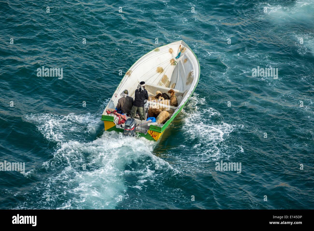 Oman, Khasab, Port, passeurs Iraniens portant un mouton à l'Oman et les produits de luxe retour à l'Iran avec petits bateaux Banque D'Images