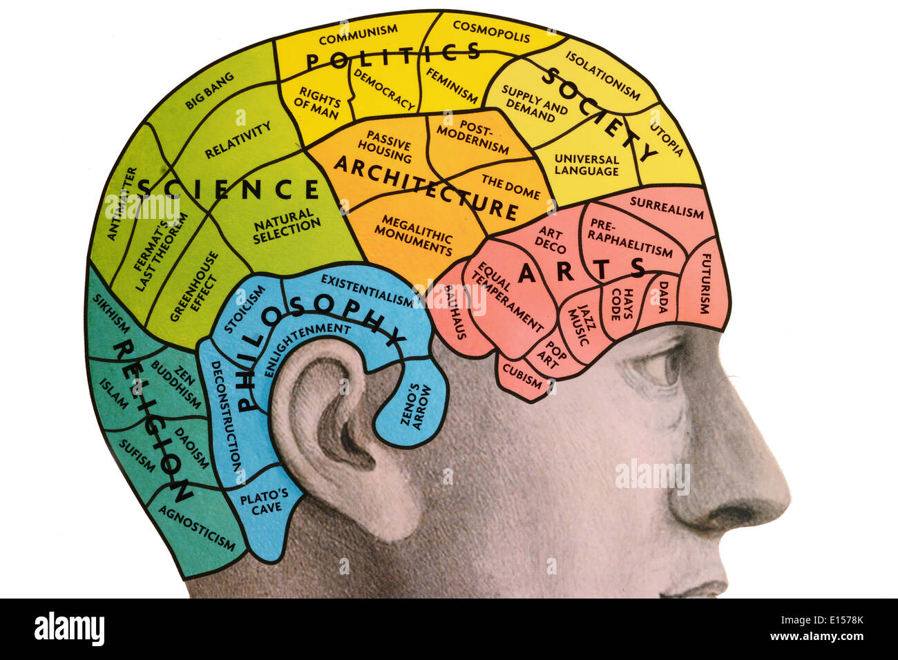 Cerveau Phrenological Photo Stock