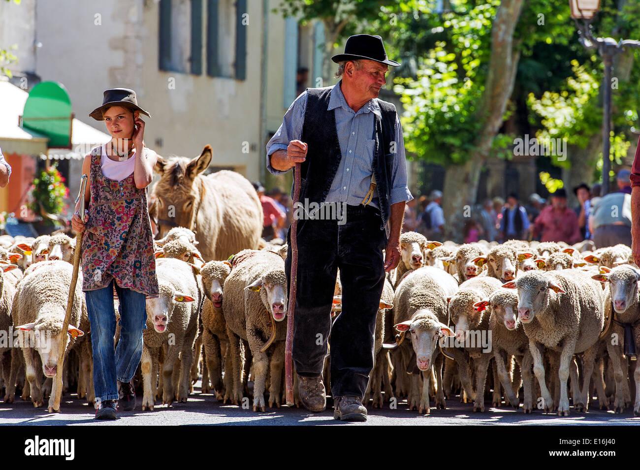 Europe, France, Bouches-du-Rhône, Saint-Rémy-de-Provence. Fête de la transhumance. Parade. Photo Stock