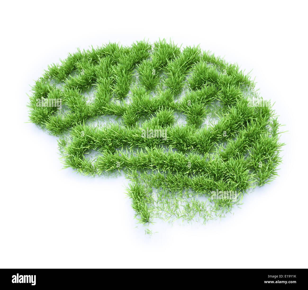 Patch d'herbe en forme de cerveau humain Banque D'Images