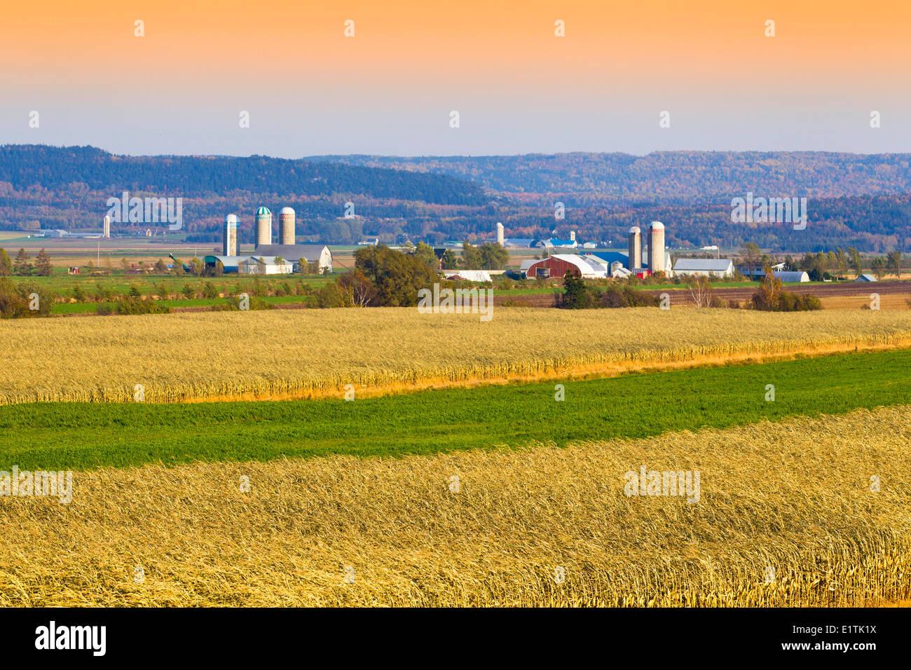 Les champs de maïs et les fermes, Saint-Denis-sur-Richelieu, Québec, Canada Photo Stock