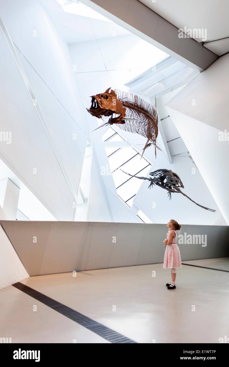 Jeune fille à la recherche de fossiles de dinosaures au Musée royal de l'Ontario, Toronto, Ontario, Photo Stock
