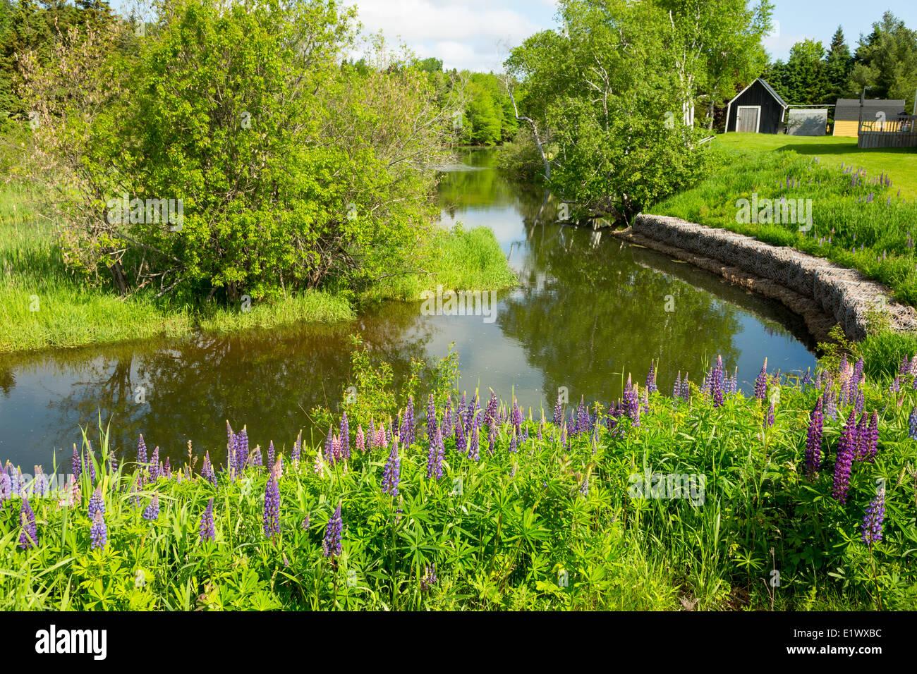 Bien que la zone rurale fonctionne de flux en Prince Edward Island, Canada Photo Stock