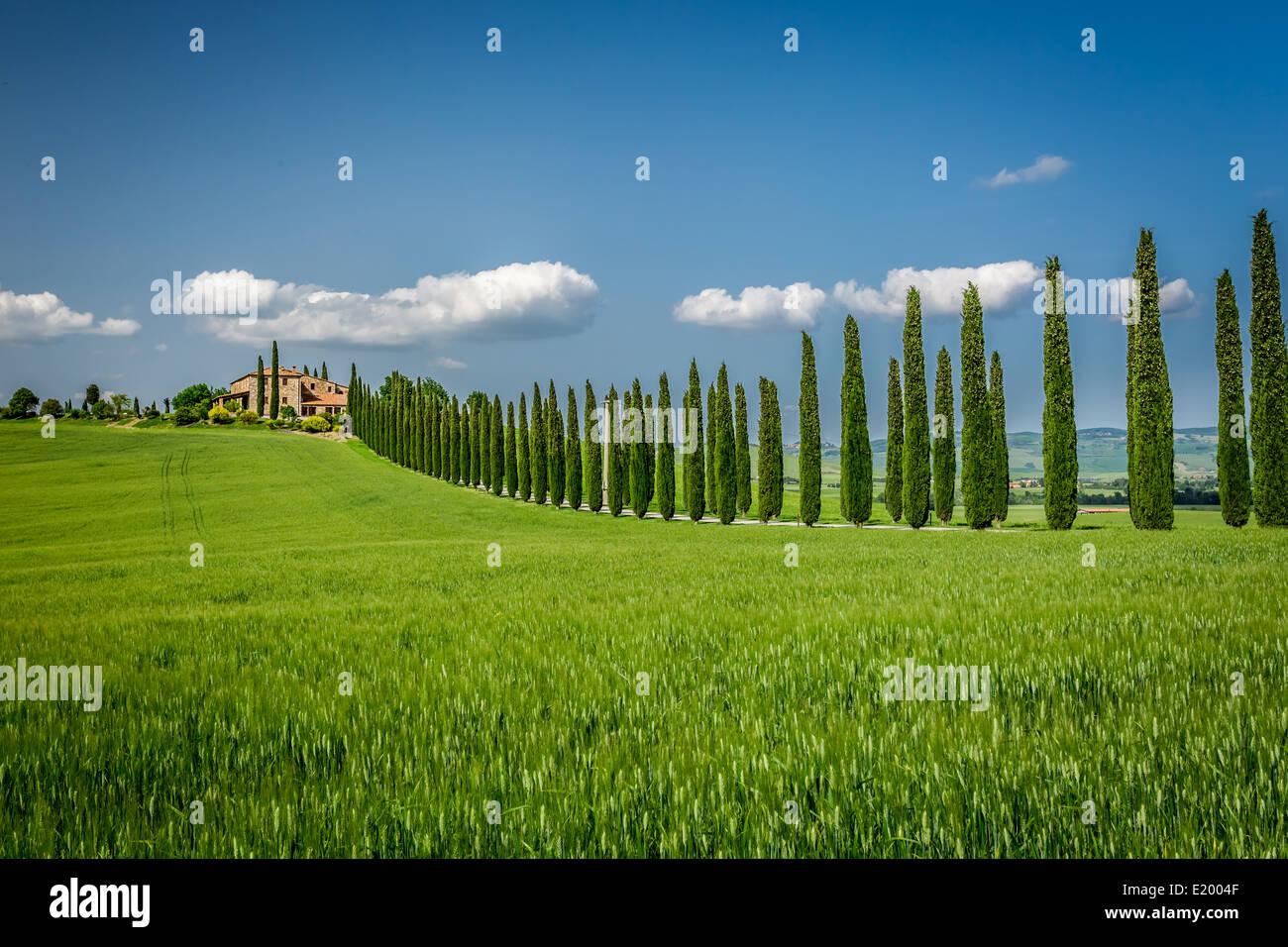 Route de la Toscane avec des arbres de cyprès Banque D'Images