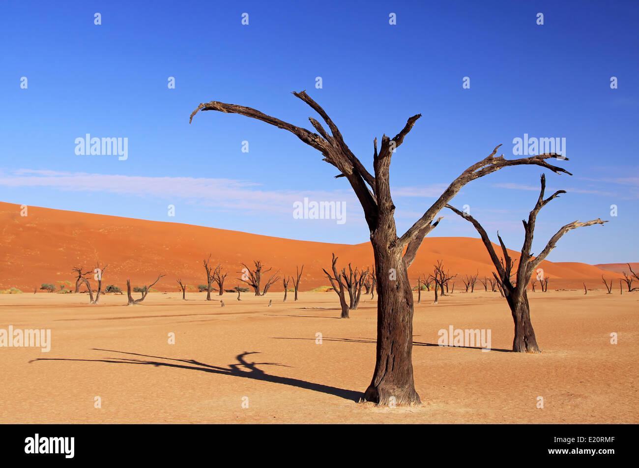 Dead Vlei, Namib-Desert, Namibie Banque D'Images