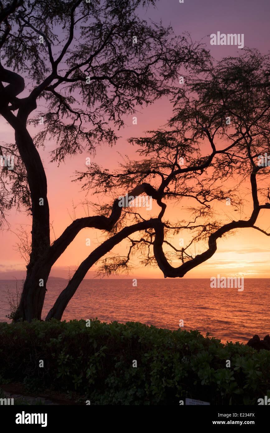 Arbre avec branches et le coucher du soleil. Maui, Hawaii. Photo Stock