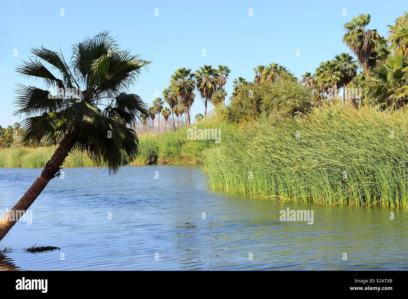 Le Mexique, l'État de Baja California Sur, San Jose del Cabo, l'estuaire San Jose Photo Stock