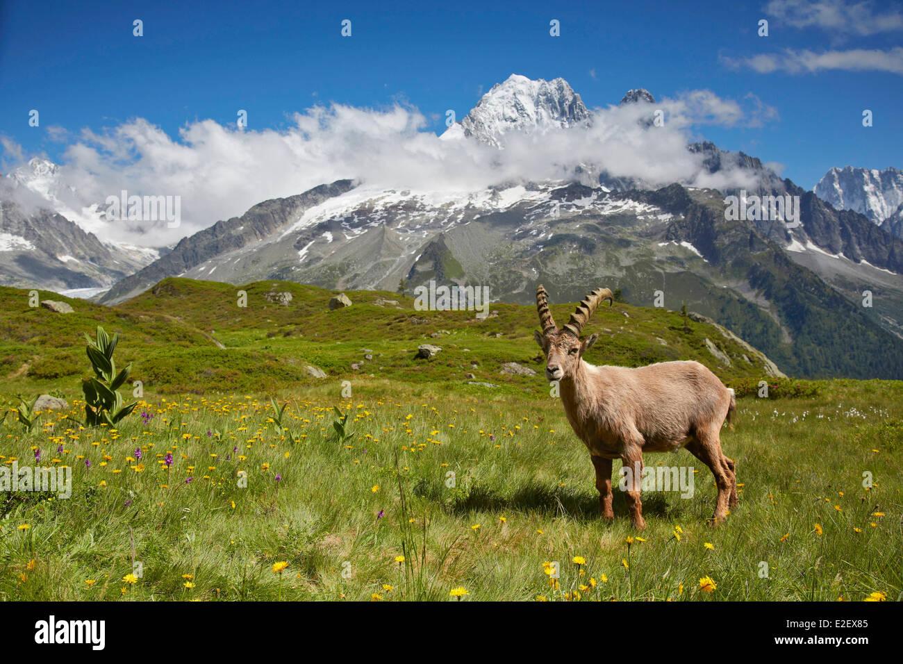 """Résultat de recherche d'images pour """"montagne en haute savoie"""""""