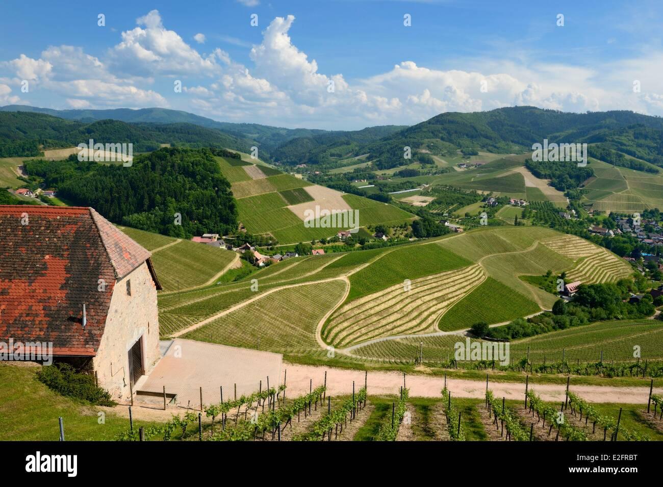Allemagne Baden Wurtemberg Durbach vineyard Photo Stock