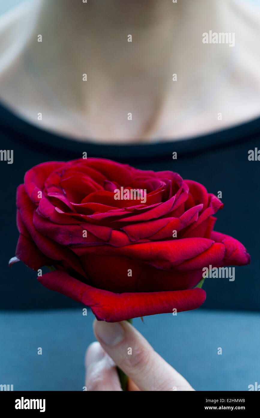 Femme tenant une rose, cropped Photo Stock