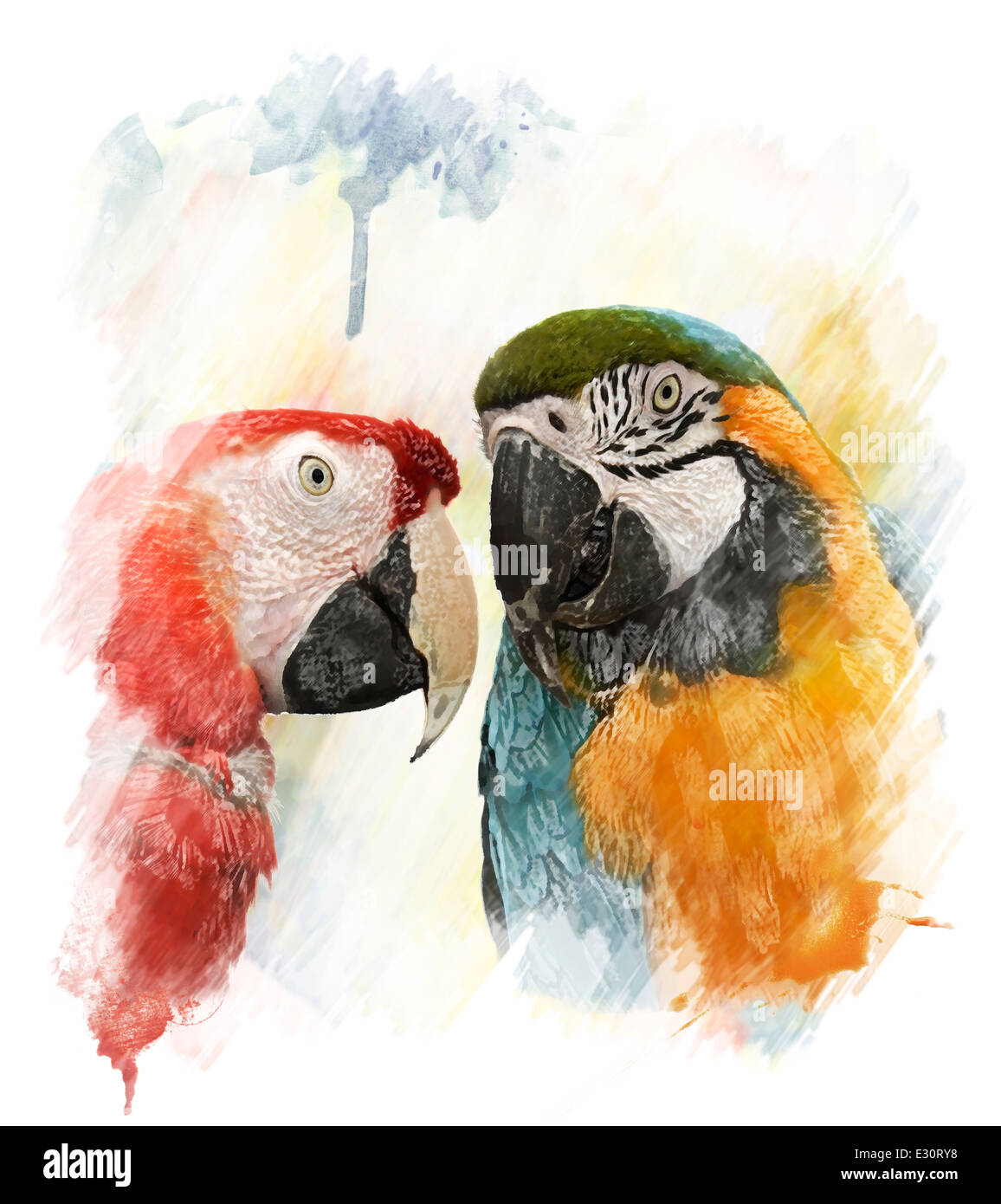 Aquarelle peinture digitale de deux perroquets colorés Photo Stock